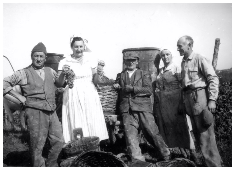 1958_Francesco e la vendemmia